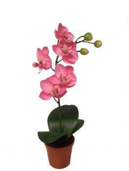 salg af Orkide 26 cm. lysrød