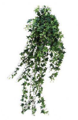 salg af Efeu busk 120cm 1100 blade