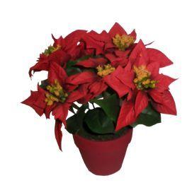 salg af Julestjerne 22 cm. 7 blomster, rød