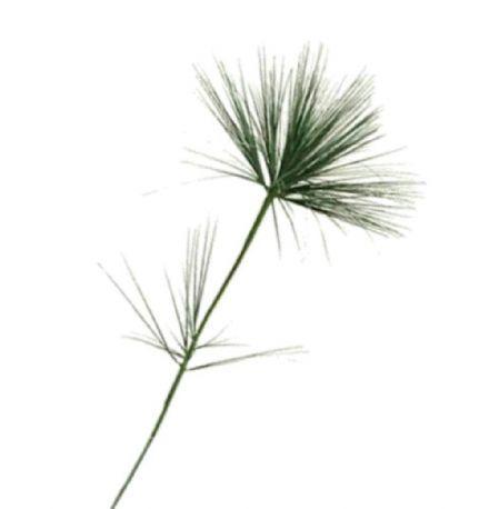 salg af Umbrella græs, 100 cm. - kunstig græs