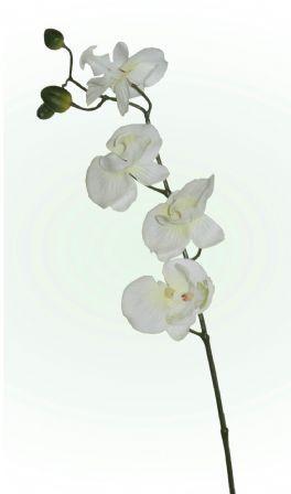 salg af Orkidegren, 57 cm. hvid