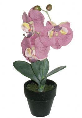 salg af Orkide 24 cm. i potte - violet