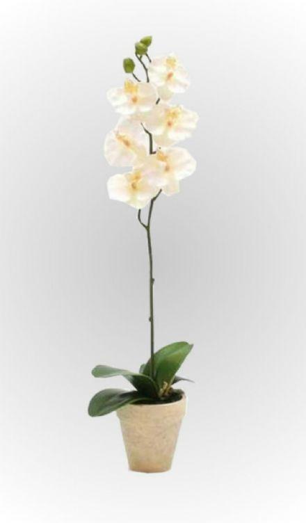 salg af Orkide hvid 52cm