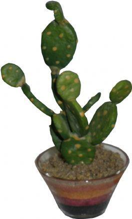 salg af Kaktus 16cm