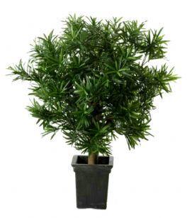 salg af Podocarpus 60 cm. - Kunstige træer