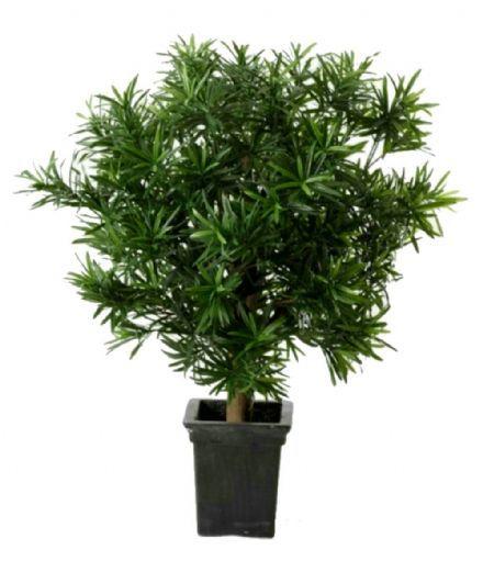 salg af Podocarpus, 60 cm. - Kunstige træer
