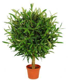 salg af Oliven ball Ø42 højde 47 cm. - Kunstige træer