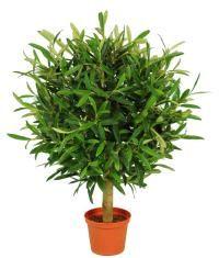 salg af Oliven ball 47 cm.