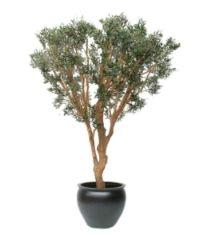 salg af Oliven bonsai 220 cm.