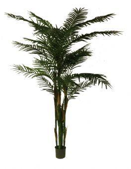 salg af Palme i potte 160 cm.