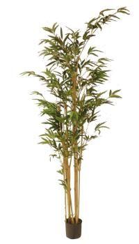 salg af Bambus i potte 150 cm.
