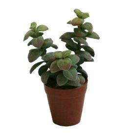 salg af Sukkulent potteplante 15 cm.