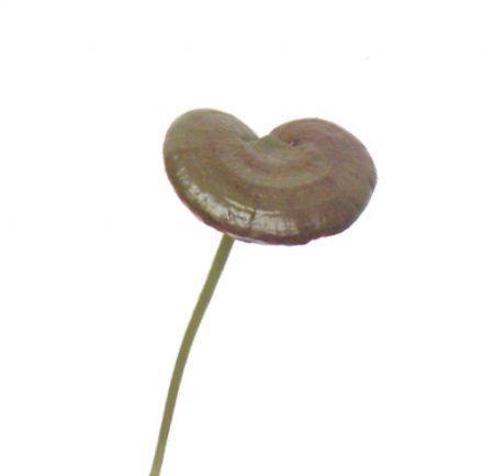 salg af Åkande blad brun - kunstige blomster
