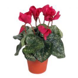salg af Fuchia Alpeviol, 35 cm. - kunstige blomster