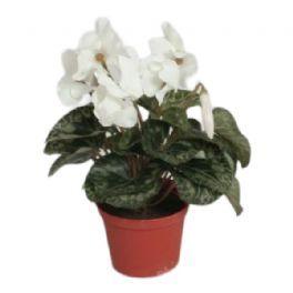 salg af Hvid Alpeviol, 35 cm. - kunstige blomster