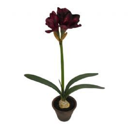 salg af Amaryllis, vinrød -  70 cm. - kunstig plante