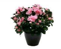 salg af Azalea lys rød 35 cm. - kunstige blomster