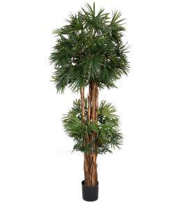 salg af Baby fan palme 190 cm.