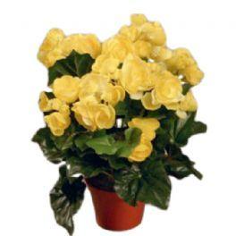 salg af Gul Begonia, 30 cm. - kunstige blomster