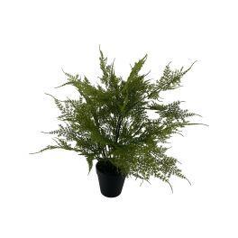salg af Plumosus, 45 cm. - kunstige planter