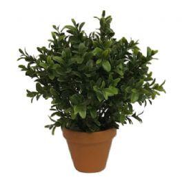 salg af Buksbom i lerpotte - 25 cm. - kunstig plante