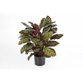 salg af Calathea,lilla - 80 cm. - kunstige planter