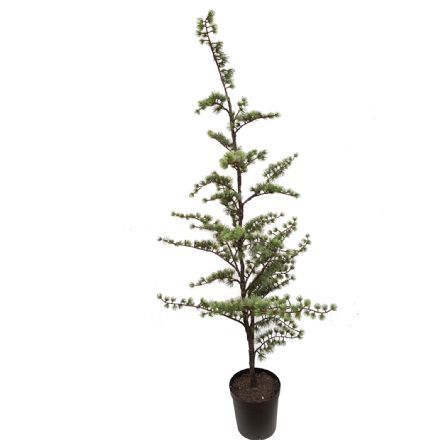 salg af Cedertræ 150 cm. - kunstige træer