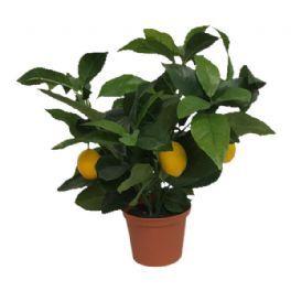 salg af Citron træ, 35 cm. - kunstige planter