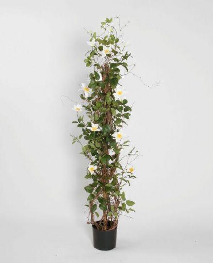 salg af Søjle Clematis, hvid/creme - 130 cm. - kunstig træ
