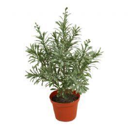 salg af Crossostephium, 35 cm. - kunstige planter
