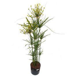 salg af Cyperus 100 cm. - Kunstige træer