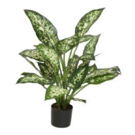 salg af Dieffenbachia, 50 cm. - kunstige planter