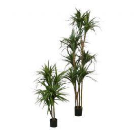 salg af Dracena, marginata - 140 cm  - Kunstige træer