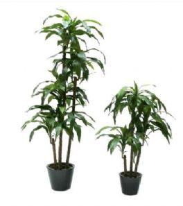 salg af Dracena, fragrans - 170 cm. - kunstige træer