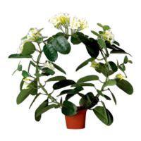 salg af Hvid Duftranke, 40 cm. - kunstige blomster