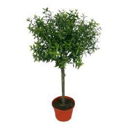 salg af Eucalyptus opst. 37 cm. - kunstige planter