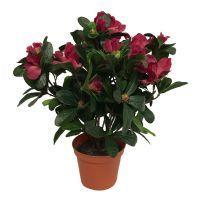 salg af Fuchsia Azalea, 30 cm. - kunstige blomster