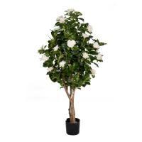 salg af Gardenia tr�, hvide blomster, 1 meter