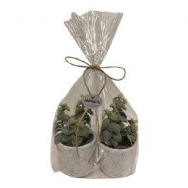 salg af Gaveide, grønne planter - H15 cm. kunstige planter