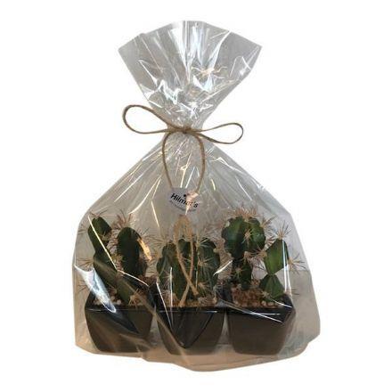 salg af Gaveide, 3 ass. kaktus - H15 cm. - kunstige planter