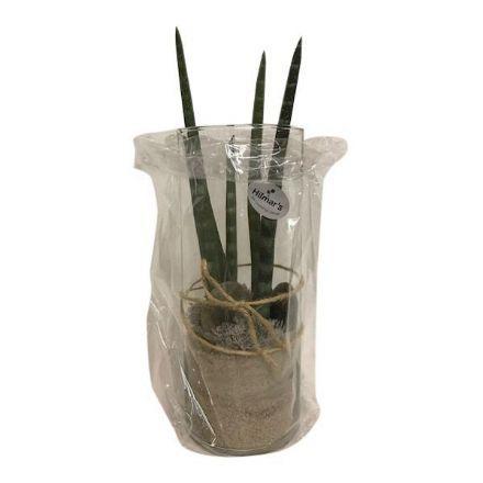 salg af Gaveide, glas m/plante - H37 cm. - kunstige planter