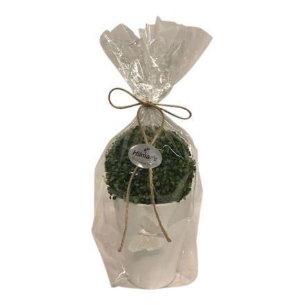 salg af Gaveide, grøn plante - H22 cm.  - kunstige planter