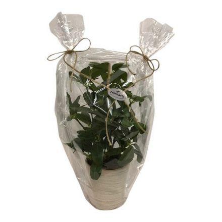 salg af Gaveide, grøn plante - 35 cm. - kunstige blomster