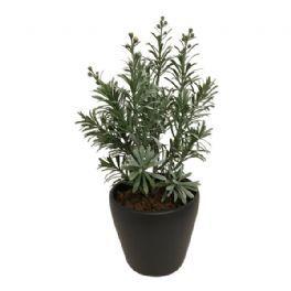 salg af Gaveide, m/plante - 30 cm.