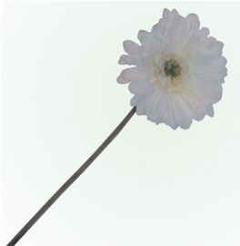 salg af Hvid gerbera - 50 cm. - kunstige blomster
