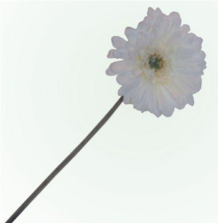 salg af Hvid gerbera, 50 cm. - kunstige blomster