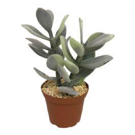 salg af Grålig sukkulent, 18 cm. - kunstig plante