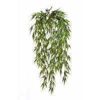 Grønne hængeplanter
