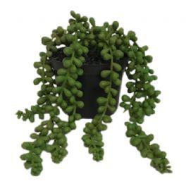salg af Senecio hænge  - 25 cm. - kunstig plante