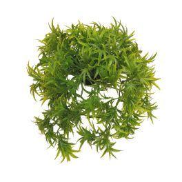 salg af Hængeplante